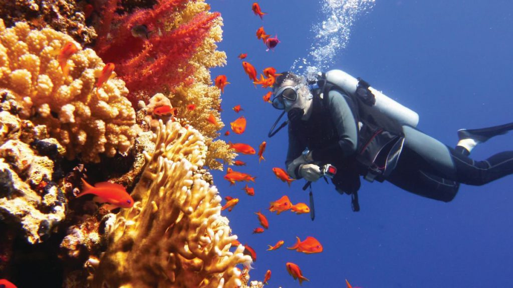 NEOM partners with KAUST to create the world's largest coral garden